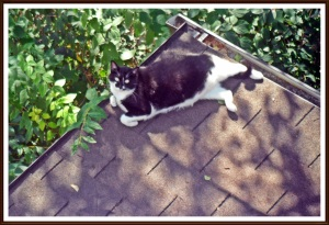 cat on a hot thin roof
